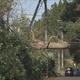 千葉の停電は依然4900軒 27日までにおおむね復旧へ