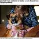 数日ぶりの再会に犬を抱きしめて喜ぶ飼い主(画像は『The Spokesman-Review 2021年6月9日付「Dog ejected from vehicle in Idaho crash found two days later herding sheep」(Kathy Plonka/The Spokesman-Review)』のスクリーンショット)