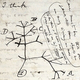 英自然科学者チャールズ・ダーウィンが1837年にノートに記した「生命の樹」のスケッチ。ケンブリッジ大学提供(2020年11月24日公開)。(c)AFP PHOTO / UNIVERSITY OF CAMBRIDGE