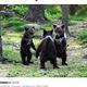 輪になって踊っているような子グマたち(画像は『LADbible 2020年2月18日付「Amateur Photographer Captures Three Bear Cubs 'Dancing' In The Forest」(Credit: Valtteri Mulkahainen)』のスクリーンショット)