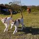三毛?サビ?フシギ模様のチェンマイの猫たち