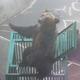 """""""進化""""しているヒグマに遭遇したら…(写真はイメージ)"""