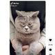 大きく見開いているような目が特徴的な猫(画像は『fedja_kot 2021年6月10日付TikTok「Просто посмотрю」』のスクリーンショット)