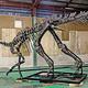 北海道むかわ町で発掘した「むかわ竜」と向き合う著者。ハドロサウルス科で全長8メートル。頭から尻尾まで8割以上が揃った日本初の全身骨格から、その姿と迫力が現代に甦る
