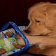 アメリカ チャリティー用のぬいぐるみを盗む「警察犬による汚職事件」発覚