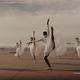 新しい様式の美しきバレエ! マスク&ソーシャルディスタンスで舞い踊るダンサーたちの動画が素晴らしい
