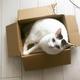 箱にすっぽりハマったシノさん(画像提供:卵山玉子さん)