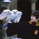 動画配信サービスHBO Maxが企画開発をスタート! TM & (C) 2001 Warner Bros. Ent. Harry Potter Publishing Rights (C) J.K.R