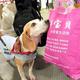 旅行者の手荷物を調べる検疫探知犬