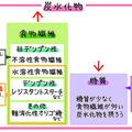 炭水化物の構成