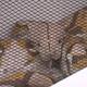 横浜市でニシキヘビが逃走した事件 飼い主の男を書類送検