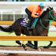 サートゥルナーリア(内馬場から撮影)は馬なりで強烈な伸びを披露した