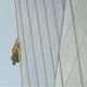 欧州一の高さを誇るロンドンのビル「ザ・シャード」に男性がよじ登る