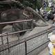 ゾウと触れあえる千葉県市原市の動物園「市原ぞうの国」=20年5月、佐々木順一撮影
