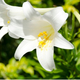 ホタルもキノコも光るなら、植物が光ってもおかしくない! ロマン溢れる「夜の植物」の世界