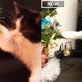 猫の3か月と3歳を比較04