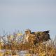 南へ向かう愛鳥家垂涎の渡り鳥、撮った! 目印はヒョウ柄のブーツ! 北海道から毎日お届け中!