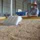 ハイブリッド稲が過去最高の豊作に 福建省建寧県