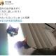 猫「力が…欲しいか?」 偶然撮影された神々しいニャンコの写真に30万超えいいね