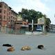 インドの路上で寝る犬たち(2016年7月11日撮影、資料写真)。(c)TAUSEEF MUSTAFA / AFP