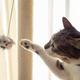 【100均】キャンドゥ「猫グッズ」6選! ケア用品から猫が食いつくおもちゃまで完璧