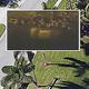 グーグルアースで池に沈んだ車が発見された/GOOGLE EARTH