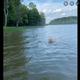 湖の真ん中にいた子鹿を岸まで誘導する犬(画像は『Ralph Dorn 2021年6月2日付Facebook「I couldn't find Harley this evening until I looked out on the lake.」』のスクリーンショット)