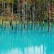 美瑛町「青い池」の紅葉。10月いっぱいが見頃です