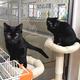 出会いを待つ、やんちゃな黒猫たち