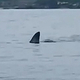 「こわ!でけえよ」突然サメ…撮影者が語る遭遇の瞬間