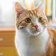 思っていた以上に機能満載の猫のひげ、抜けても大丈夫?