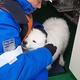 氷の上で迷子の真っ白な子犬を救助 ロシア