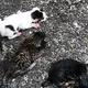 ゴミ袋から生後間もない子ネコ4匹を救出 動物愛護法違反の疑いで捜査
