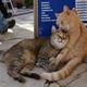 国全体が「猫島」!どこに行っても猫がいるマルタ