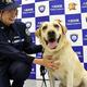 大麻の密輸を防いだ麻薬探知犬「リオ」とハンドラーの前田瞳さん