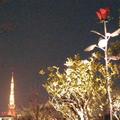 夜景をISO10,000で撮影