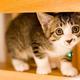 あなたが猫のためによかれと思ってしていることは、もしかしたら、実は猫に大きなストレスを与えているかも……?