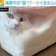 透明ケースに入った猫に反響「フワフワの白パンができるね」