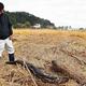 土砂やごみが流入した水田を見つめる武島さん(福島県相馬市で)