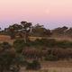 ボツワナの動物保護区を歩くゾウの集団=2010年/Cameron Spencer/Getty Images Europe/Getty Images