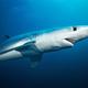 ヌタウナギからサメへ、太古の海が育んだ魚類の進化
