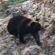 クマが小学校に…ハンター駆除 帯広市