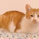 猫のしぐさで本音がわかる!? 頭突きは猫からの愛情表現だった!