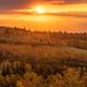 黄色く色づいたダケカンバと夕陽が相まって、視界は黄金色に染まりました