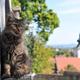 静かで美しい街リュブリャナで猫と出会う