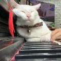 ご主人のピアノを聴く猫03