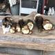 タケノコと三毛猫ちゃんが並ぶ写真が「見分けがつかない!」とTwitterで話題になっている(提供写真)