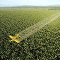 飛行機で農薬を撒く、大規模プランテーション農業。こうした農業