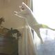 """SNSで大人気の""""無重力猫ミルコ""""、飼い主さんが投稿を始めた理由とは?(画像提供:@mirko__chisa)"""