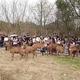 良渚古城遺跡公園で子鹿が人気者に 浙江省杭州市